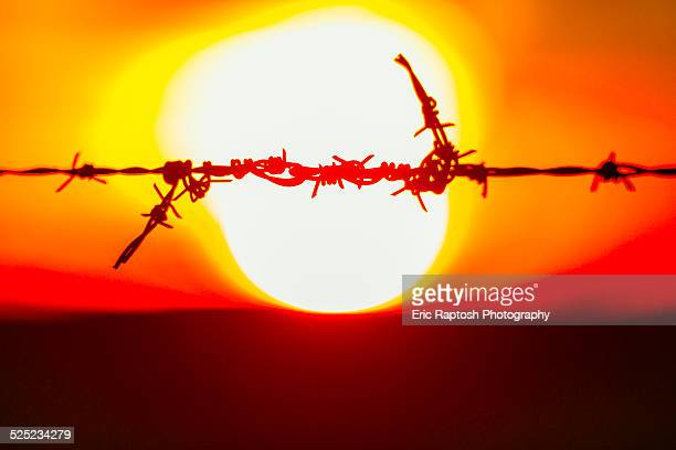 repair on barbed wire against a setting sun - fascism stock pictures, royalty-free photos & images