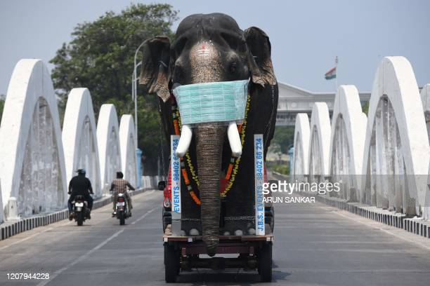 TOPSHOT A replica of an elephant with a facemask is driven on trailer pulled by a car to bring awareness during a oneday Janata curfew imposed by the...