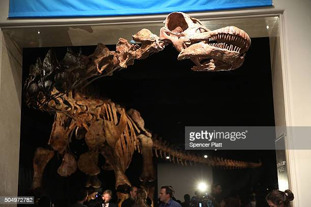 A replica of one of the largest dinosaurs ever discovered is unveiled at the American Museum of Natural History on January 14 2016 in New York City...