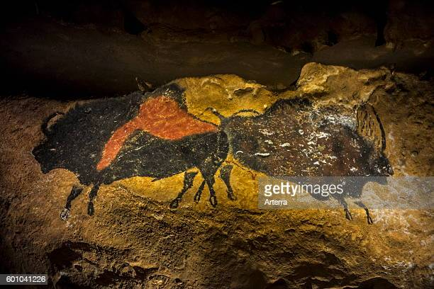 Replica of part of the Lascaux cave showing two prehistoric bull bison at the Le Thot museum Thonac near Montignac Dordogne France