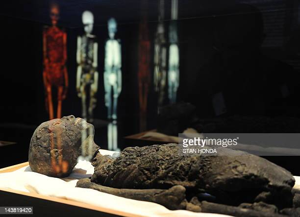 A replica of Tutankhamun's mummy is on display April 21 2010 at a preview of 'Tutankhamun and the Golden Age of the Pharaohs' an exhibition at...