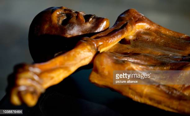 A replication of Oetzi the Iceman is on display as part of the exhibition Oetzi 20 at the state archeaological museum in Munich Germany 06 February...