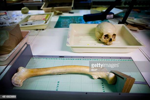 Reportage in the French National Police's Criminal Research Institute in RosnysousBois France The Anthropology Thanatology Odontology Department