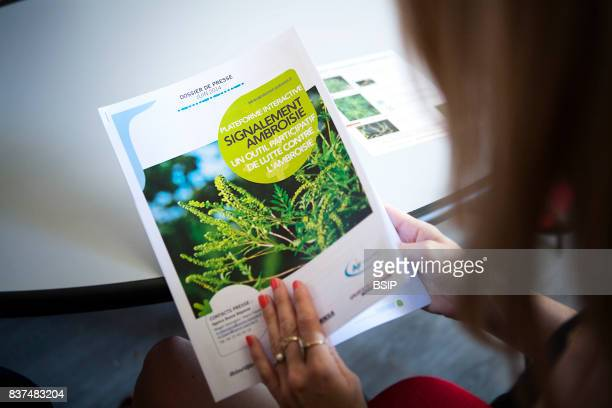 Reportage Sustainable Development and Energy Ministry provides surveillance and information on air quality AuvergneRhªneAlpes area of France Ragweed...