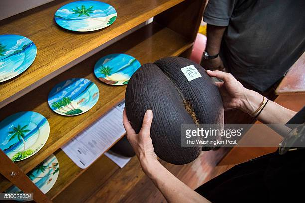 Reporter Andrea Sachs holds a coconut from the cocodemer palm tree in a gift shop on the island of Mah�� in Victoria Seychelles on Thursday May 05...