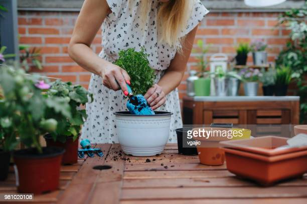 repotting in backyard - potting stock pictures, royalty-free photos & images