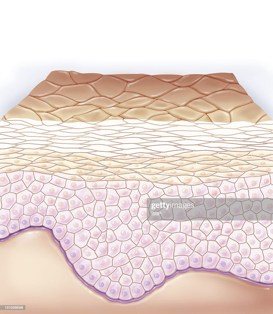 Skin Illustration Pictures Getty Images