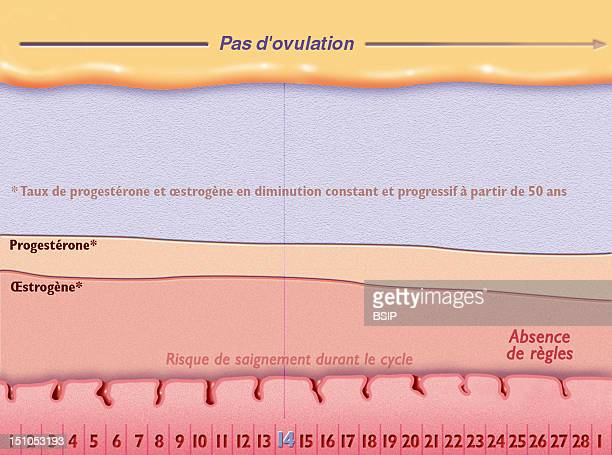 Representation Of The Menstrual Cycle Of A Menopaused Woman The Rate Of Progesterons And Estrogens From The Age 50 Years Old Do Not Cease To Decrease...