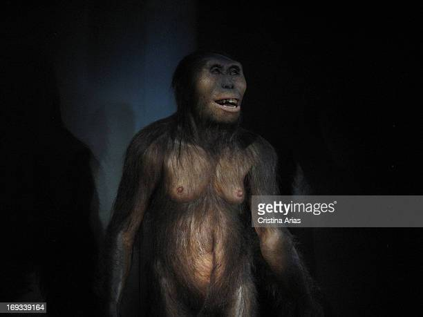 Reproduction of the hominid Lucy, belonging to the the austrolopithecus afarienseis, is located in the Hall of Hominids of the Museum of Human...