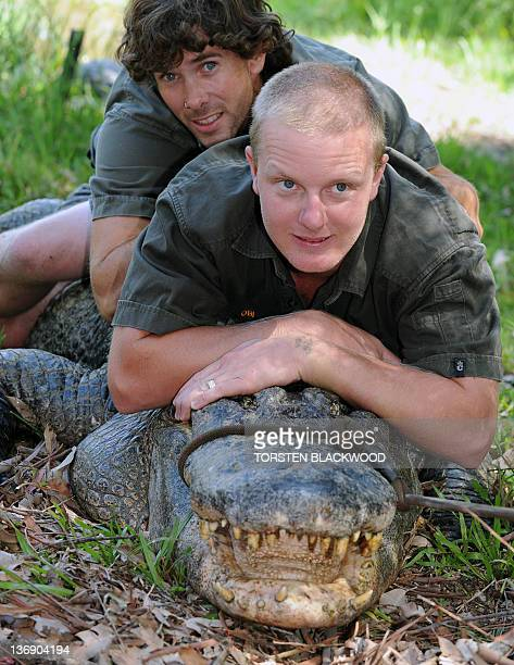 Reptile keepers Brad Gabriel and Chris Wallace try to control American alligator 'Mr Skinny' while alligator eggs are collected from a nearby nest at...