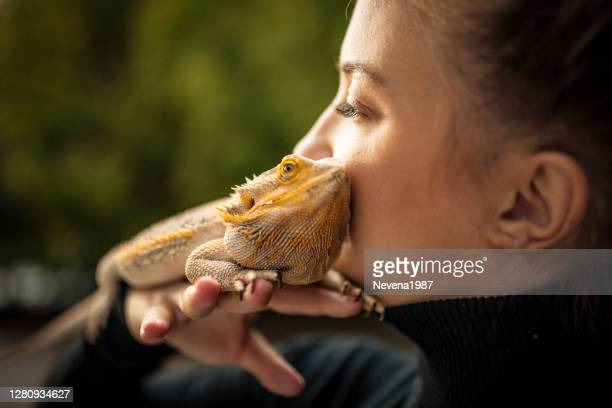 reptile love - bearded dragon stock pictures, royalty-free photos & images