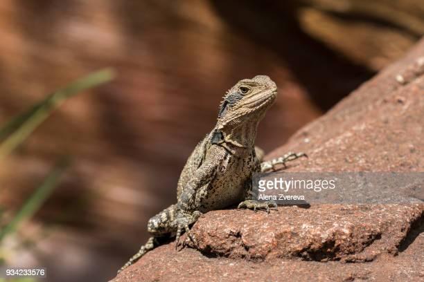 Reptile portrait