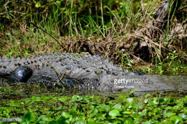 reptiles - 国立野生生物保護区 ストックフォトと画像