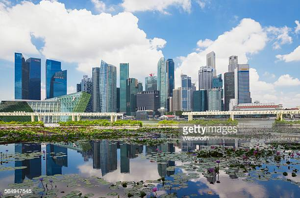 republic of singapor, singapore, skyline of marina bay district with lily pond in the foreground - pianta acquatica foto e immagini stock