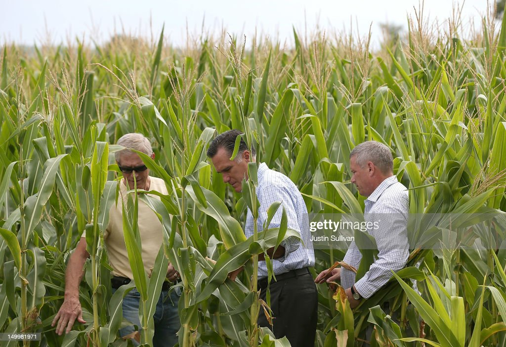 Republican presidential candidate and former Massachusetts Gov. Mitt Romney (C) tours a corn field with Iowa Secretary of Agriculture Bill Northey (R) and farmer Lemar Koethe on August 8, 2012 in Des Moines, Iowa. Mitt Romney is campaigning in Iowa before traveling to New Jersey and New York for fundraising events.