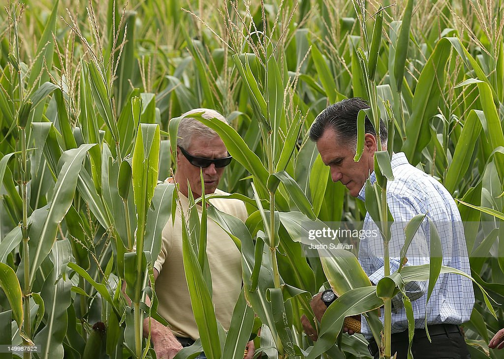Republican presidential candidate and former Massachusetts Gov. Mitt Romney (R) looks at corn with corn farmer Lemar Koethe in a cornfield on August 8, 2012 in Des Moines, Iowa. Mitt Romney is campaigning in Iowa before traveling to New Jersey and New York for fundraising events.