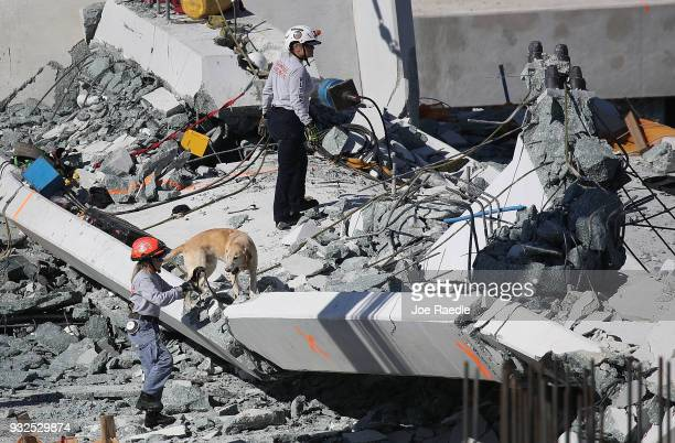 A rescue dog and its handler works at the scene where a pedestrian bridge collapsed a few days after it was built over southwest 8th street allowing...