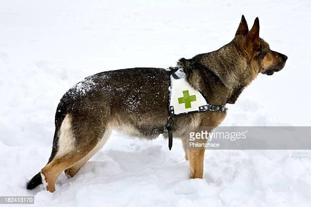 rescue dog in winter