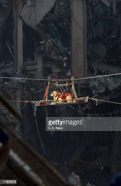 Rescue dog is transported out of the debris of the World Trade Center September 15, 2001 days after the September 11, 2001 terrorist attack.