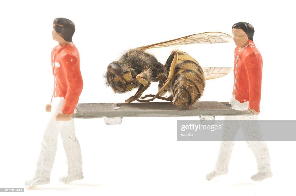 rescue hornet : Stock-Foto