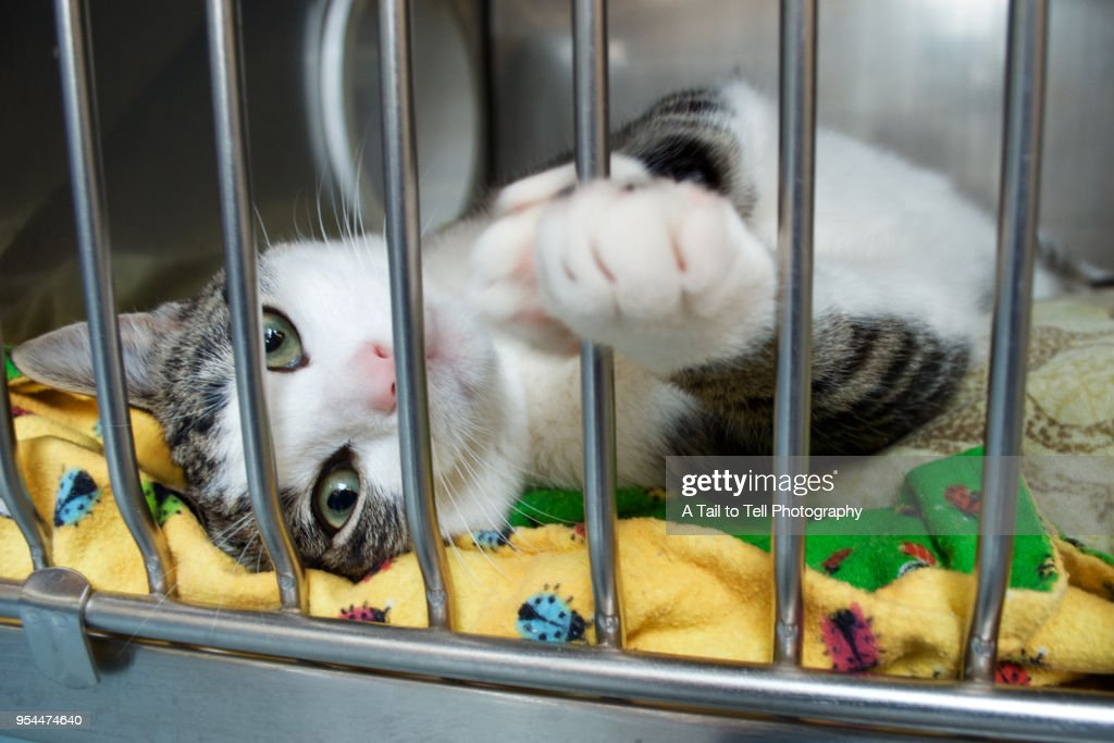 A rescue kitten reaches a paw out of its cage : Stock Photo