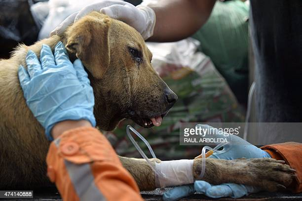 Rescue members check a dog named 'Esperanza' after it was found amid debris following the landslide in Salgar Municipality Antioquia department...