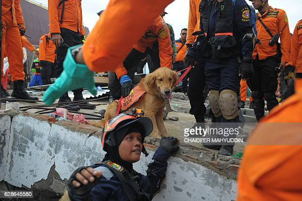 A rescue team and their dog search for victims under the collapsed buildings in Pidie Jaya Aceh province on December 9 after a 64 earthquake struck...