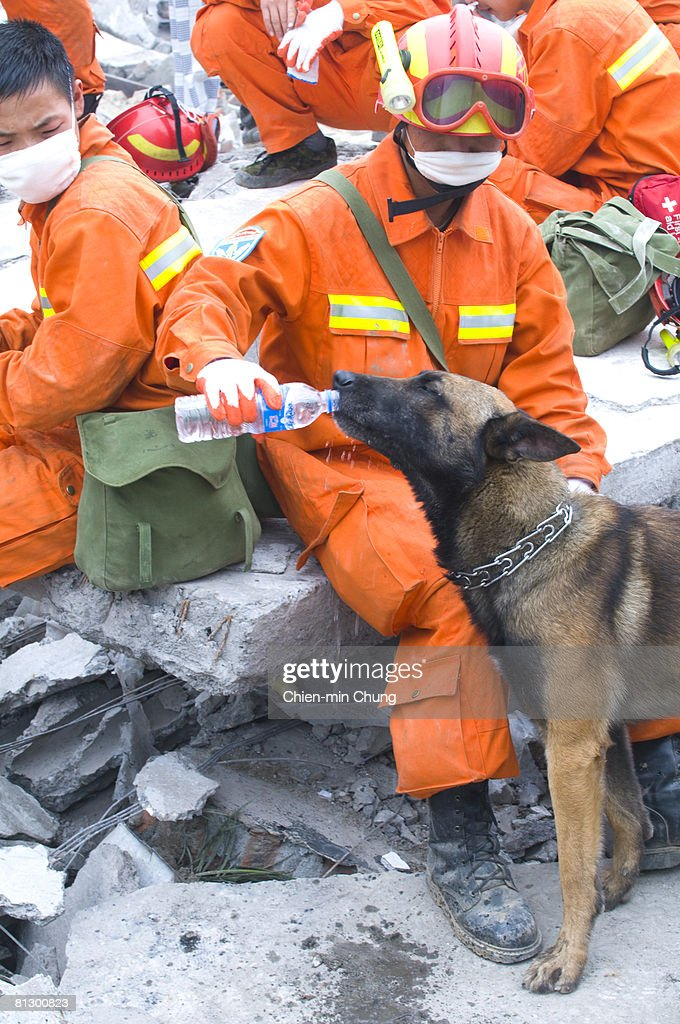 A rescue team handler gives his dog water May 17, 2008 in