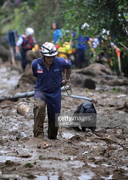 A rescue team member walks with his dog by the mud in San Antonio de Escazu in the outskirts of San Jose after a landslide hit the village on...