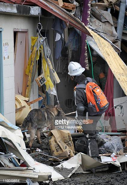 A rescue worker and a rescue dog look for missing people who were lost in the tsunami in Natori Miyagi Prefecture on March 14 2011 following the...