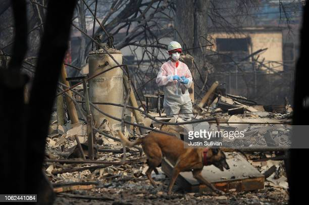 A rescue worker and her cadaver dog search the Paradise Gardens apartments for victims of the Camp Fire on November 16 2018 in Paradise California...