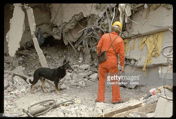 A rescue worker brings a dog to search for bodies in rubble of a building destroyed in the 1985 earthquake in Mexico City Mexico