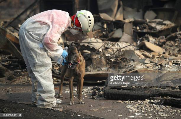 A rescue worker gives her cadaver dog water as they search the Paradise Gardens apartments for victims of the Camp Fire on November 16 2018 in...