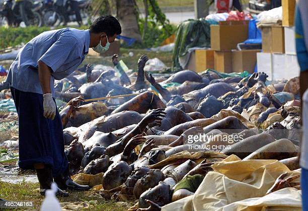 A rescue worker looks at dead bodies for the record at a relief center set up at a temple in Khao Lak north of the devastated Thai tourist resort...
