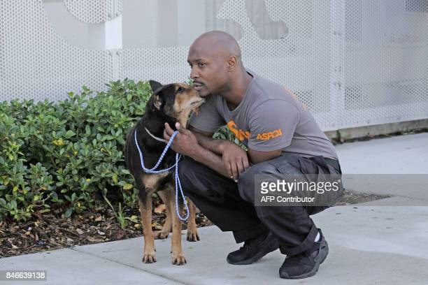 ASPCA rescue worker Marlon Roberts comforts a terrier mix at the Miami Dade Animal shelter before sending the dog to South Carolina for adoption in...