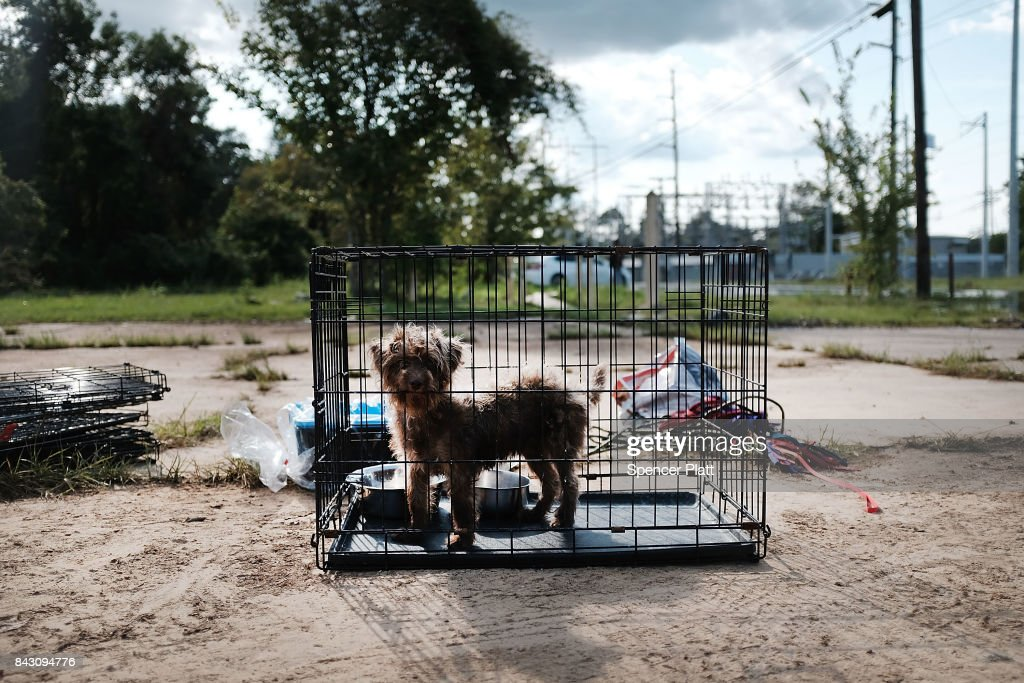 A rescued dog from a flooded home stands in a cage on a street in Orange as Texas slowly moves toward recovery from the devastation of Hurricane Harvey on September 5, 2017 in Orange, Texas. Almost a week after Hurricane Harvey ravaged parts of the state, some neighborhoods still remained flooded and without electricity. While downtown Houston is returning to business, thousands continue to live in shelters, hotels and other accommodations as they contemplate their future.