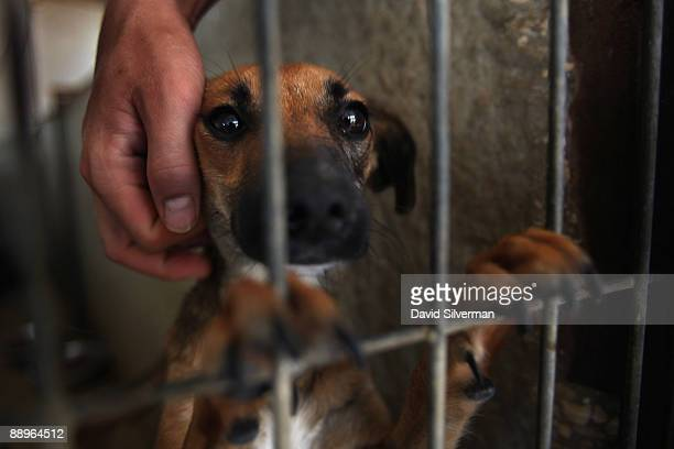A rescued puppy gets some attention from a worker as it waits to adopted at the 'Let The Animals Live' pet shelter on July 10 2009 in Ramle Israel...