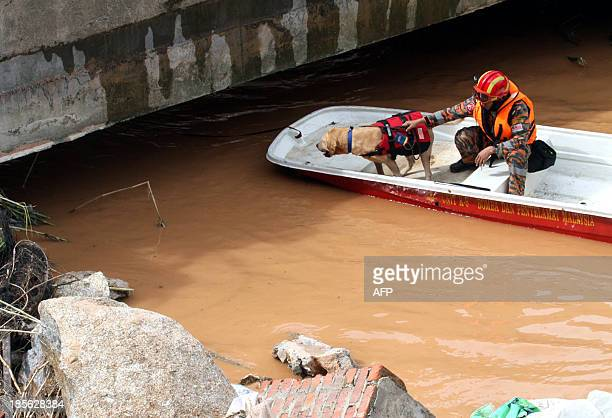 A rescuer and a dog search for a missing flood victim under a bridge after houses were destroyed by water released from a dam in Malaysia's Cameron...