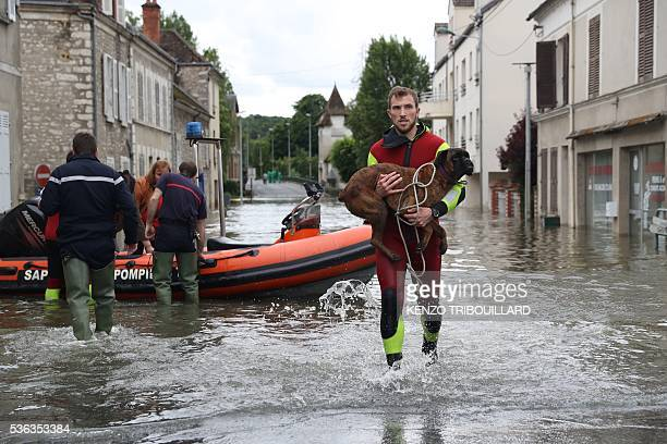 A rescuer evacuate a dog accross a flooded street on June 1 2016 in SouppessurLoing southeast of Paris Torrential downpours have lashed parts of...