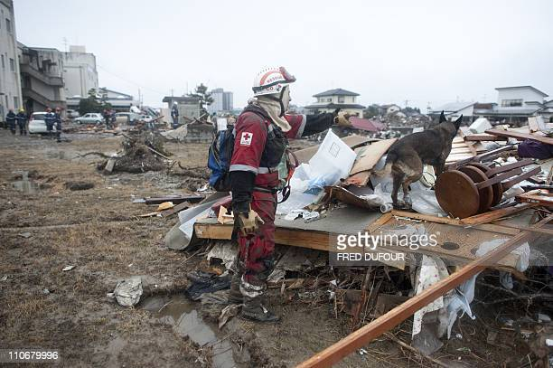 A rescuer from the Mexican Red Cross searches for bodies with a dog in Sendai on March 16 2011 days after a massive earthquake and tsunami devastated...