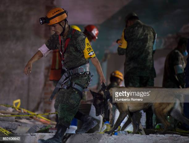 A rescuer walks with a dog to search for survivors in a collapsed building three days after the magnitude 71 earthquake jolted central Mexico killing...
