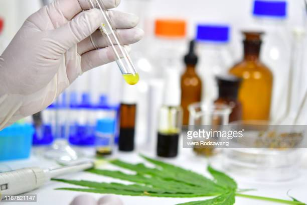 research and experiment of the cannabidiol oil (cbd) - cbd oil stock pictures, royalty-free photos & images