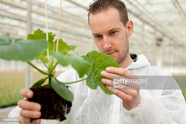 Research and genetic engineering in a greenhouse.