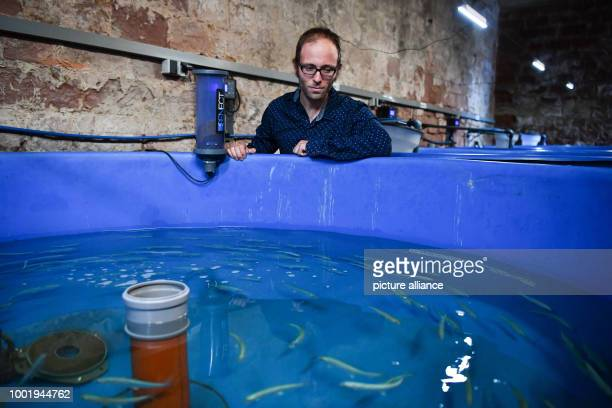 Research associate Matthias Hundt standing next to a pool of the recirculation system filled with whitefish and crayfish in Landau Germany 12 July...