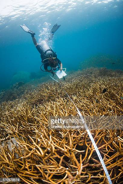 A research diver collects data in coral reef