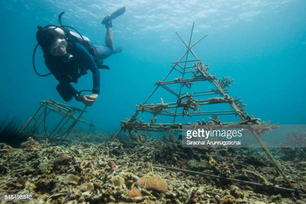 A research diver swims by an artificial reef