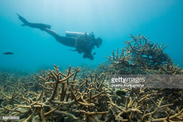 Research diver swims by an artificial reef structure in recovering reef