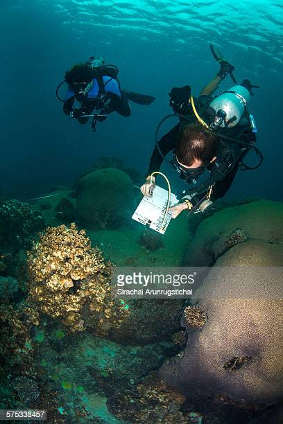 Research divers takes coral reef monitoring data