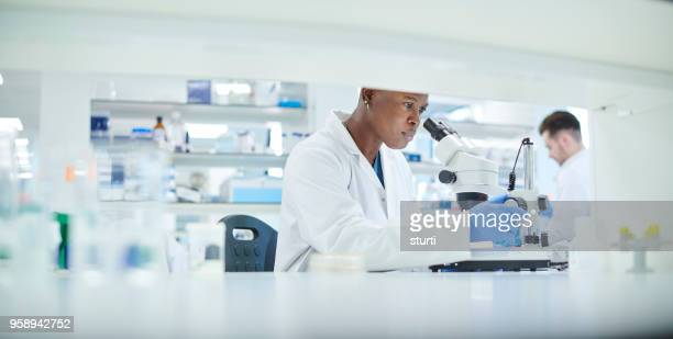 research lab - microbiology stock pictures, royalty-free photos & images