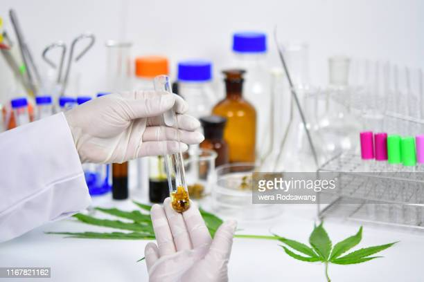 research laboratory hemp oil extract - cannabinoid stock pictures, royalty-free photos & images